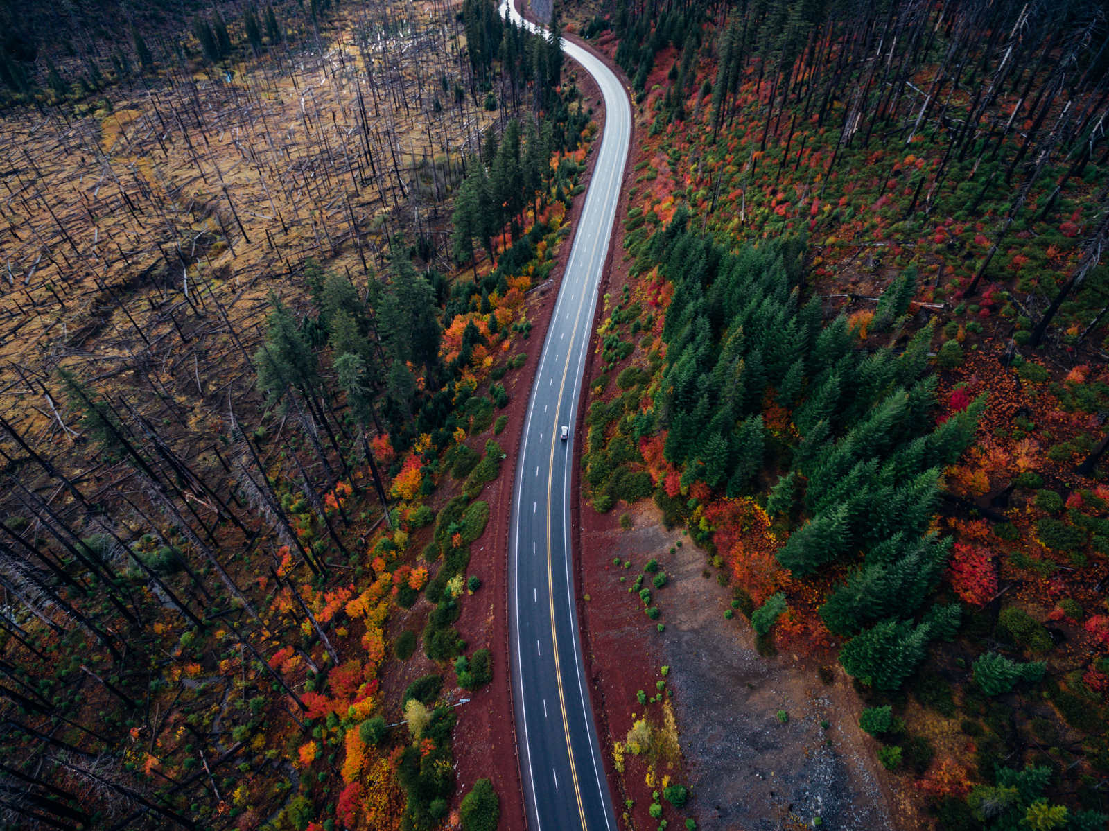 Road through Duke Forest from above